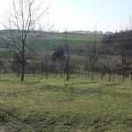 Babywald - Bild 2