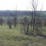 Babywald - Bild 3