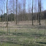 Babywald EN 1
