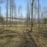 Babywald EN 6