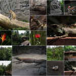 Zoo Leipzig 04